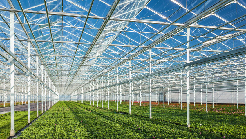 Case Studies - Greenhouse Builder / Supplier